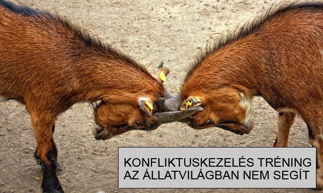konfliktuskezelés tréning állatvilág